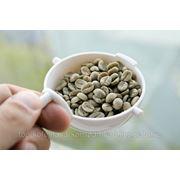 Зеленый кофе в зернах фото