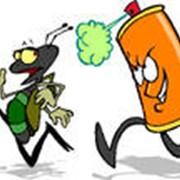 Уничтожение всех видов насекомых фото