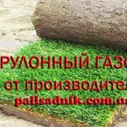 Рулонный газон цена прошлогодняя, газон купить фото