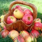 Продам яблоки Кандиль оптом фото