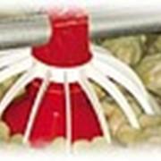 Напольное оборудование для кормления кур несушек фото