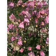 Разные цветы фото