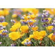 Отдушка Полевые цветы 10 мл фото
