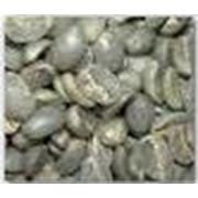 Арабика зеленой фасолью фото
