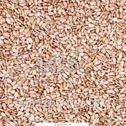 Ядра семян подсолнечника (для оптовых продаж) фото