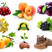 Выращивание фруктов,Ceteronis-ST,SRL фото