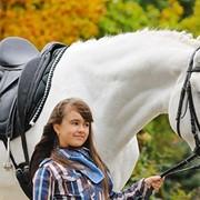Организация фотосессий с лошадьми фото
