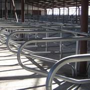 Оборудование стойловое для молочных ферм фото