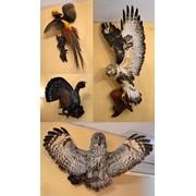 Чучела птиц (сова, глухарь, фазан, ястреб) фото
