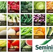 Семена овощей в Узбекистане от SEMINIS из первых рук! фото