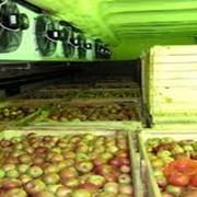 Технологии длительного хранения фруктов. фото