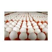 Яйцо куриное по выгодной цене фото