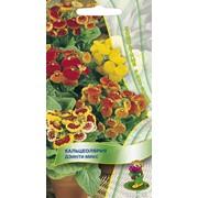Семена комнатного растения Кальцеолярия Дэинти микс (комн.) фото