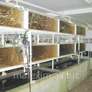 Разведение аквариумных рыбок в Молдове фото