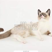 Вакцинация кошек фото