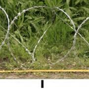 Колюче-ленточное заграждение Казачка 450 мм 3 скобы 5 витков/м.п. фото