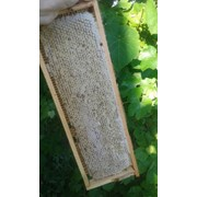 Забрус и мёд в сотах фото