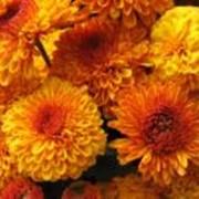 Черенки хризантемы оптом Х Аусма фото