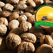 Орехи грецкие Bukhara Agro Export фото