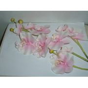 Цветок Орхидея фото