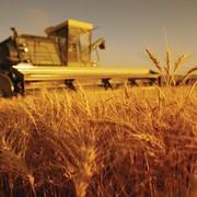 Автоматизация сельского хозяйства фото