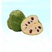 ЧЕРИМОЙЯ (дерево мороженого) Cherimoya, импортная продукция ОПТОМ фото