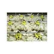 Системы кормления для птицефабрик фото