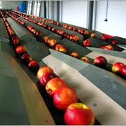 Проект цеха переработки фруктов с линией сортировки фото
