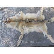 Шкуры волков фото