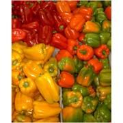 Перец. Болгарский перец. Перец сладкий. Купить болгарский перец от производителя. фото