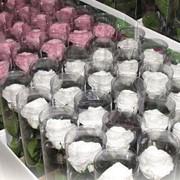 Стабилизированные цветы в подарочной упаковке фото