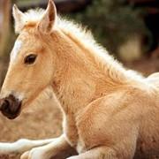 Средства гигиены для животных фото