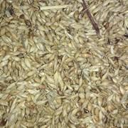 Семена суданки фото