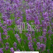 Трава лекарственная фото
