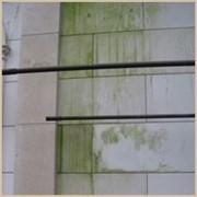 Удаление Чистка плесени и мха с гранита,мрамора,кирпича фото