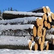 Сортиментная лесозаготовка фото