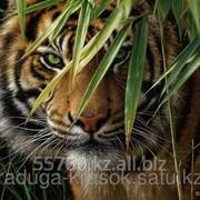 Картина по номерам Тигр в зарослях фото