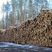 Деловой лес кругляк, пиловочник фото