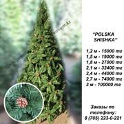 """Елки искусственные премиум класса """"POLSKA SHISHKA"""" фото"""
