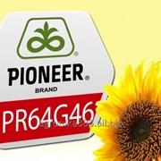 Гибрид подсолнечника PR64G46 (Pioneer) фото
