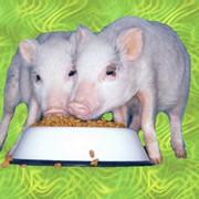 Аминокислотные кормовые добавки БМВД Гровер фото
