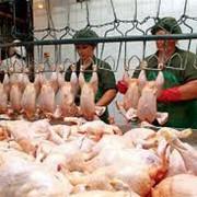 Курятина и субпродукты фасованные. фото