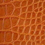 Кожа крокодила, кожа натуральная, экзотическая кожа фото