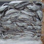 Ставрида н/р морской заморозки фото