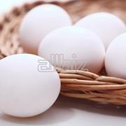 Яйцо куриное (грязь). Любой объём. Цена договорная фото