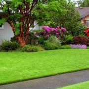 Рулонные газоны фото