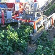 Уборка овощей (самоходные и прицепные машины) фото