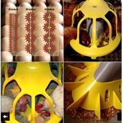 Системы кормления для птицеферм фото