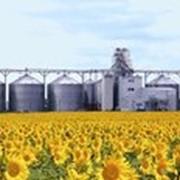Хранение и переработка зерновых и технических культур. фото