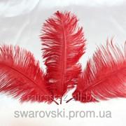 Перо страуса. Цвет Красный. Размер 20-25cм. (1шт.) ПС15-06 фото